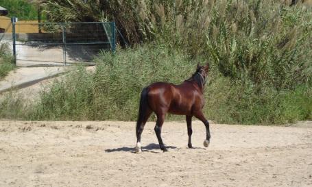 hest-viajero2