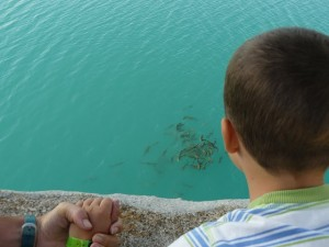 Fish-Bermajales-lake-Granada-300x225
